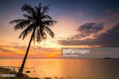 Stock Photo : Sunset on the shore of a tropical island with palm
