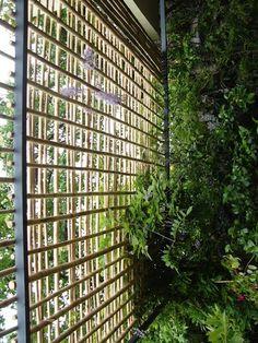 DIY bamboo garden dividers... Create a secret garden room