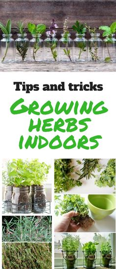How To Grow Herbs Indoors? Don't Buy Herbs Anymore After Reading 6 These Ideas! It's not difficult to grow herbs indoors. Try these ideas and find the one that suits you the most! Hydroponic Gardening, Container Gardening, Organic Gardening, Gardening Tips, Indoor Herb Gardening, Vertical Herb Gardens, Small Herb Gardens, Growing Herbs Indoors, Types Of Herbs