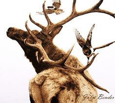 Shaken Not Stirred (bull elk with magpies) by julie bender, Pyrography, 22 x 25