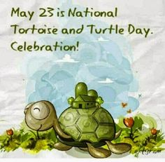 May 23 National Tortoise & Turtle Day Turtle Day, Turtle Time, Pet Turtle, Turtle Pond, Cute Turtles, Baby Turtles, Sulcata Tortoise, Russian Tortoise, Tortoise Turtle