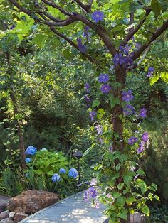 bring color off the ground with flowering vines in trees
