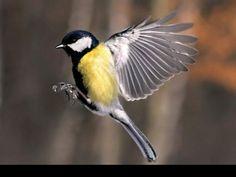 save off b7564 50d1d Jak fotografować ptaki