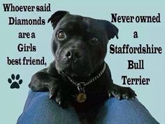 Staffies are better than diamonds any day #StaffordshireBullTerrier