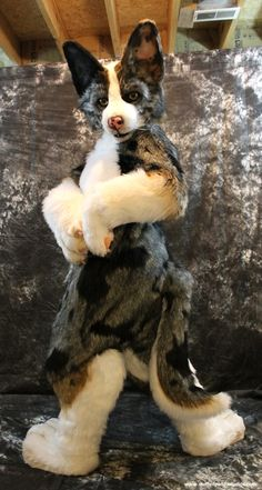 Cardigan corgi fursuit made by StuffedPandaStudios