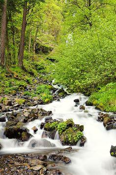 Wahkeena Falls Lower Stream - Oregon Waterfalls