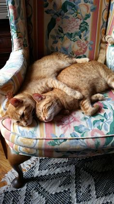(lol)Cats in Love - Orange Cat - Ideas of Orange Cat - (lol)Cats in Love The post (lol)Cats in Love appeared first on Cat Gig. Kittens Cutest, Cats And Kittens, Cute Cats, Funny Cats, Kitty Cats, Orange Tabby Cats, Red Cat, Animals And Pets, Cute Animals