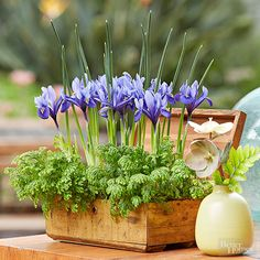 Dwarf Iris, Spikemoss, and a Flea Market Find - line the box with plastic wrap, then drop in 4-inch pots of budded irises and mosses. Use fillers like spikemoss as the supporting cast for seasonal flowers. After blooms fade, foliage carries on this trunk show.