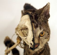ok, i know this looks really creepy, but the scientist in me loves it. I think it is absolutely amazing to see what the bone structure looks like and what the cat looks like at the same time!