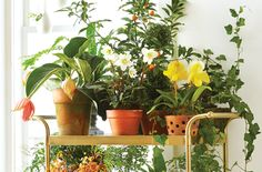No space for a greenhouse or garden? You can fill up a vintage or new bar cart with tons of spring pots and trailing plants to add color and texture to any corner.