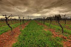 Tamburlaine Wines | Hunter Valley
