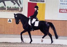 Dressage #dressage #horse