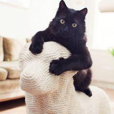 Katzen-Kratzbaum Dog                                                       …                                                                                                                                                                                 Mehr