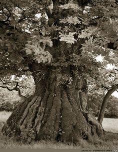 Die ältesten Bäume der Welt!