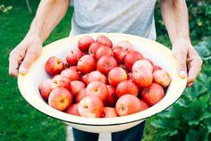 Check out Apple Varieties | 16 Heirloom Apples & What They Taste Like at http://pioneersettler.com/heirloom-apples-varieties/