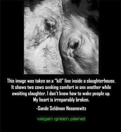 Breaks my heart, please Go Vegan. You will feel better physically and your heart will swell with love.