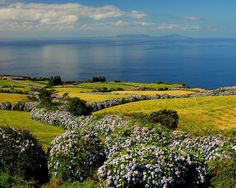 são jorge, Azores, Portugal