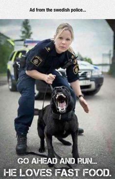 funny-Swedish-police-dog