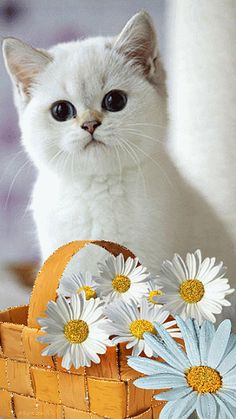 Gato Gif Foto Linda Animal Gato Animals And Pets Kittens Kitty Cat Pictures Funny Cats Fluffy Kittens Dog Cat Animals And Pets, Baby Animals, Cute Animals, Funny Animals, Cute Kittens, Cats And Kittens, Fluffy Kittens, I Love Cats, Cool Cats