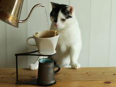 cat&coffee