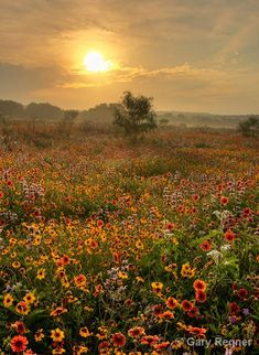 wildflowers I would love to be there!