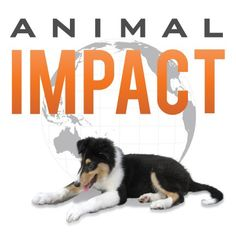 """Animal Impact: Secrets Proven to Achieve Results and Move the World"" von Caryn Ginsberg"
