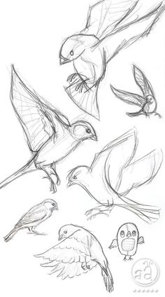 40 Free and Simple Animal Sketches Ideas and Inspirations for Drawing – Samir – Animal Draw… . Secrets of being well-groomed 40 Free and simple animal sketches Ideas and inspiration for drawing – Samir – Animal Draw… . Art Drawings Sketches, Bird Drawings, Sketch Art, Simple Animal Drawings, Animal Sketches Easy, Simple Sketches, Simple Bird Drawing, Anatomy Sketches, Funny Drawings