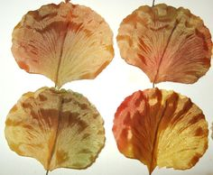 Vintage Millinery Flower Leaves Peach Yellow Green For Home Decor, Wreath, Hat Making. $9.00, via Etsy.