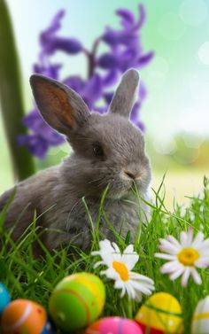 Ostern Easter wishes Easter Art, Easter Eggs, Easter Bunny Pictures, Beautiful Rabbit, Amazing Animals, Easter Backgrounds, Holiday Wallpaper, Happy Easter Wallpaper, Easter Wishes