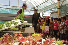 Wisata tanaman Hidroponik