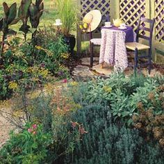 How to Grow a Tea Garden Gardens Herbal teas and Cups