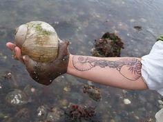 sea snail, and cool nautilus tat