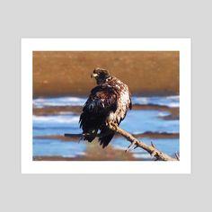 #INPRNT #fine art #print #poster #art Print Poster, Wildlife, Eagle, Birds, Fine Art, Art Prints, Printed, Gallery, Paper