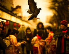So I was walking through a market in Tokyo and this crazy bird came started dive-bombing this food beside me. I quickly focused on the food (manual focus!) then panned the camera up to grab this. I cannot claim full credit for this being so sharp — I will gladly admit that it was Extremely Lucky!  - Tokyo, Japan - Photo from #treyratcliff Trey Ratcliff at http://www.StuckInCustoms.com