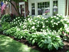 Hydrangea & Hosta - the perfect combination for low maintenance garden that is still striking #FrontGarden