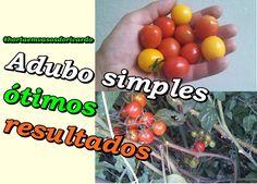 Adube sua planta fácil com adubos simples e tenha uma bela colheita igual a minha
