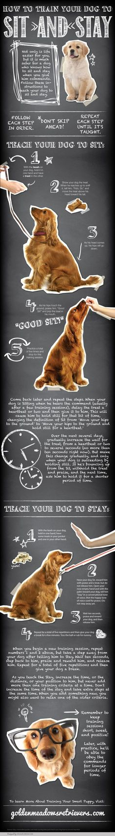 Pupy Training Treats - Pupy Training Treats - [Infographic] Teach Your Dog to Sit and Stay - www. - How to train a puppy? - How to train a puppy? Golden Retrievers, Puppies Tips, Poodle Puppies, Lab Puppies, Puppy Care, Pet Care, Dog Care Tips, Pet Tips, Dog Hacks