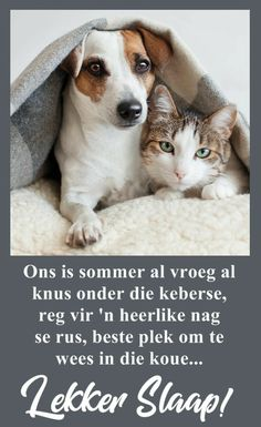 Beautiful Good Night Images, Good Night Sleep Tight, Afrikaanse Quotes, Goeie Nag, Morning Blessings, Cute Animals, Winter, Prayers, Messages