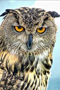 Owl by David Dukesell on 500px