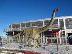 Centre des Sciences de Montréal, Qc. Montreal Ville, Kangaroo, Centre, Horses, Animals, Baby Bjorn, Animales, Animaux, Animal