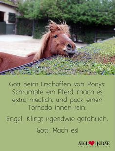 Ponys sind halt einfach toll names Cute Piggies, 3 Month Olds, Horse Quotes, Sarcastic Quotes, Woodland Party, Fine Motor Skills, Baby Care, Equestrian, Beauty Hacks