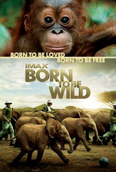 Born To Be Wild- Imax/Omniversum (7,5)