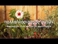 Αναλυτικός οδηγός για τον πολλαπλασιασμό του δεντρολίβανου με μοσχεύματα, ένας εύκολος και γρήγορος τρόπος για να δημιουργήσουμε νέα φυτά. Diy And Crafts, Home And Garden, Backyard, Nature, Flowers, Plants, Gardening, Youtube, Patio