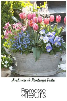 Collection de 5 plants de bisannuelles en mini-mottes, 10 bulbes de tulipes trio& Collection of 5 biennial plants in mini-clods, 10 tulip bulbs triumph & Princess& and 1 dwarf columbine in a pot for a flower box in spring in very soft pastel colors. Container Flowers, Container Plants, Container Gardening, Biennial Plants, Tulips Garden, Planting Tulips, Tulip Bulbs, Deco Floral, Spring Garden