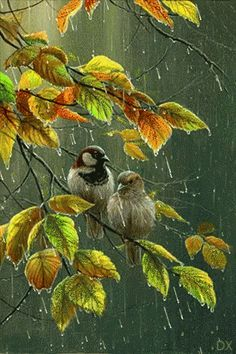 The perfect Birds Rain Art Animated GIF for your conversation. Discover and Share the best GIFs on Tenor. Pretty Birds, Love Birds, Beautiful Birds, Rain Gif, Wildlife Art, Morning Images, Morning Quotes, Bird Art, Rainy Days