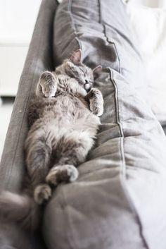 My Daniel Green slippers are as soft and warm as a sleeping kitten.  #danielgreenslippers @Daniel Green