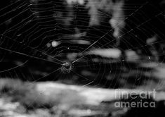 Spider Web Black and White by Andrea Anderegg