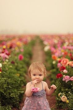 So cute little flower in a field of flowers. / wish i knew whre a feild lik this was, wud love pics lik this.