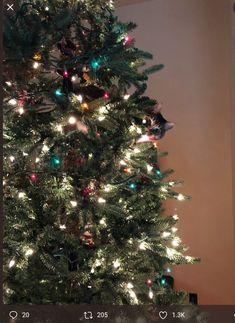 Cat Shots, Christmas Tree, Kitty, Holiday Decor, Home Decor, Dogs, Gatos, Xmas, Cats