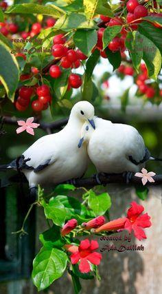 Moji albumi All Birds, Cute Birds, Pretty Birds, Beautiful Birds, Beautiful Images, Animals Beautiful, Animals And Pets, Cute Animals, Beautiful Nature Wallpaper